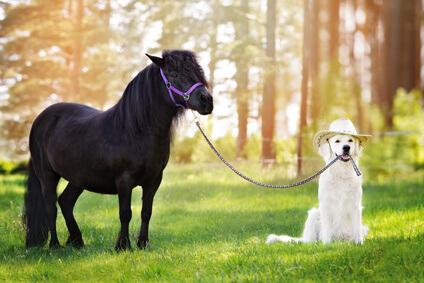 Ist eine Tierhalterhaftpflichtversicherung notwendig?